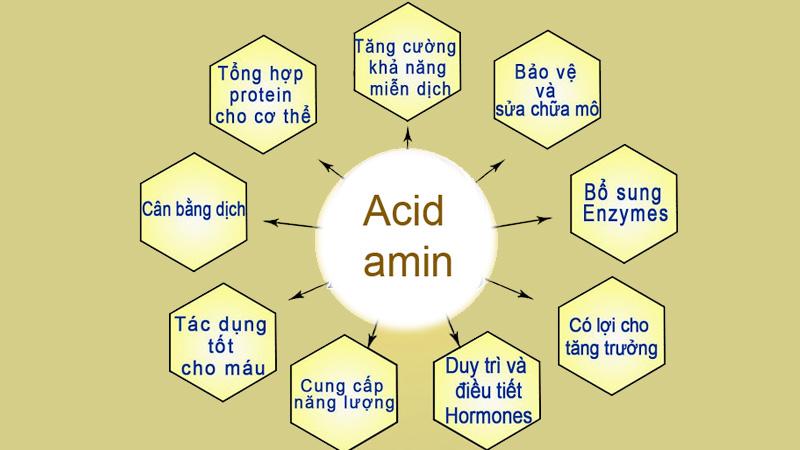 Sữa ong chúa có chứa nhiều axit amin có lợi cho cơ thể