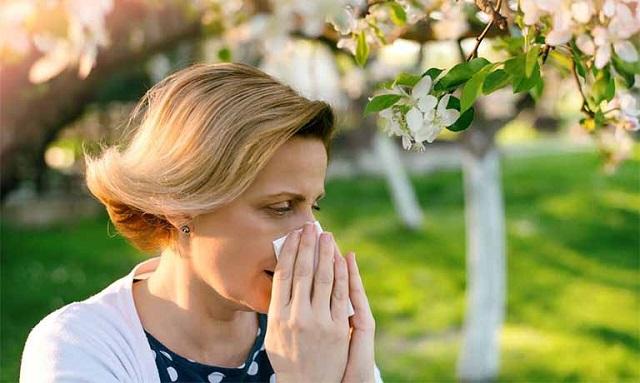 Người bị dị ứng với phấn hoa