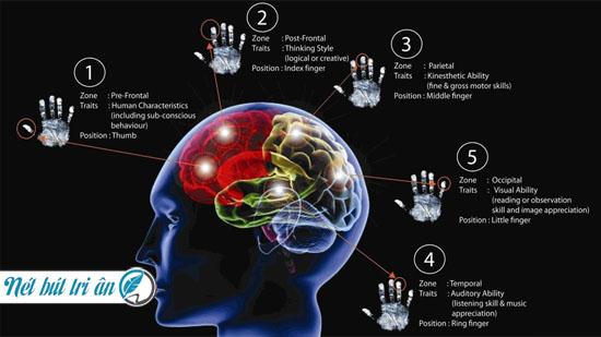 Nghiên cứu khoa học chỉ ra sự liên quan chặt chẽ giữa vân tay và não bộ