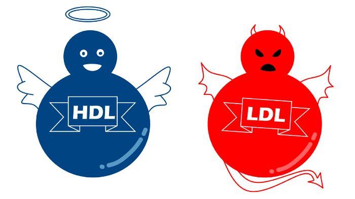 Có hai loại cholesterol tốt và cholesterol xấu