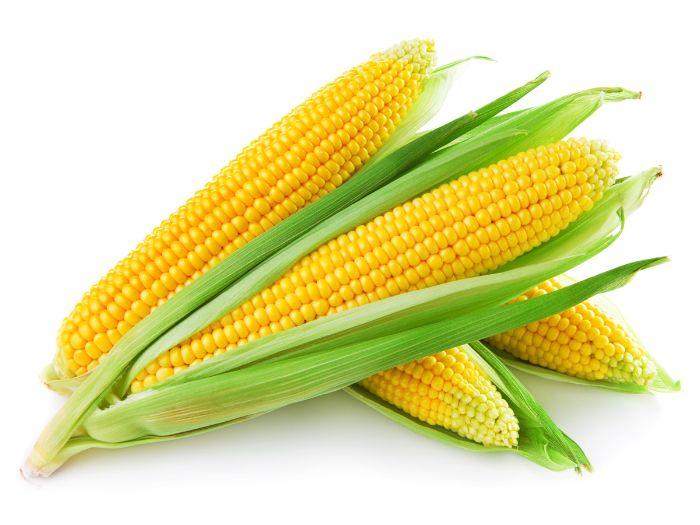 Ngô ngọt là nguyên liệu chính làm sữa bắp