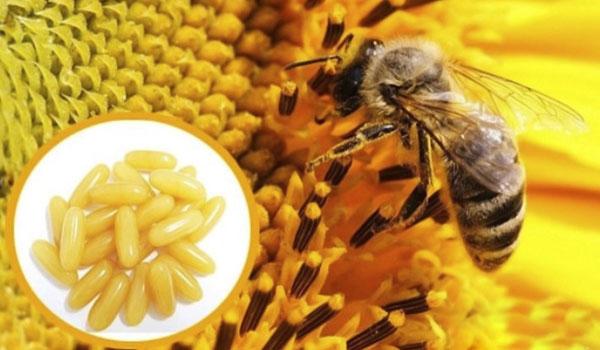 công dụng của Sữa ong chúa của Pháp