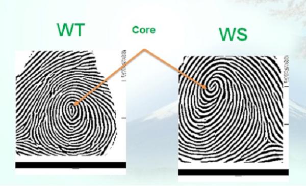 Đặc trưng của nhóm WT, WS.
