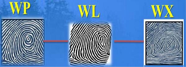 Chủng vân tay :WP, WX, WL