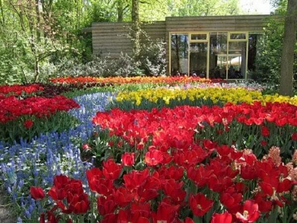 Hoa Tulip có nguồn gốc từ Trung Đông