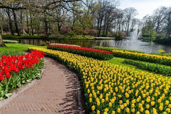 Ý nghĩa hoa Tulip với các màu sắc