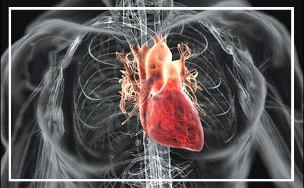 Chức năng của từng ngăn tim là gì?