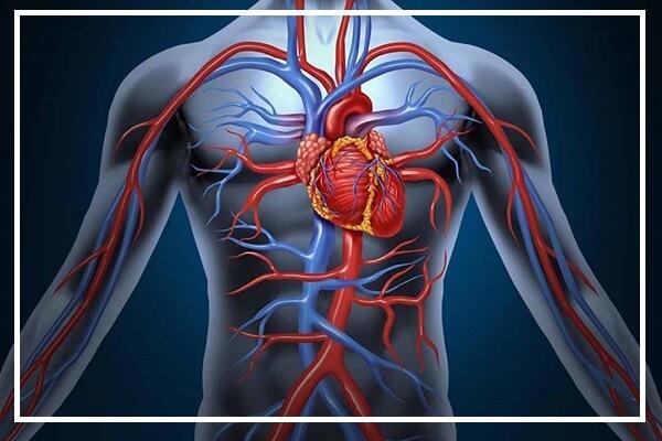 Cơ chế hoạt động bơm máu của tim