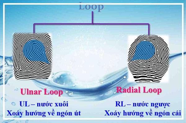 vân tay chủng nước Loop